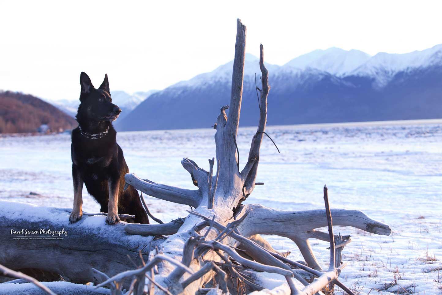 Chief-Driftwood.jpg