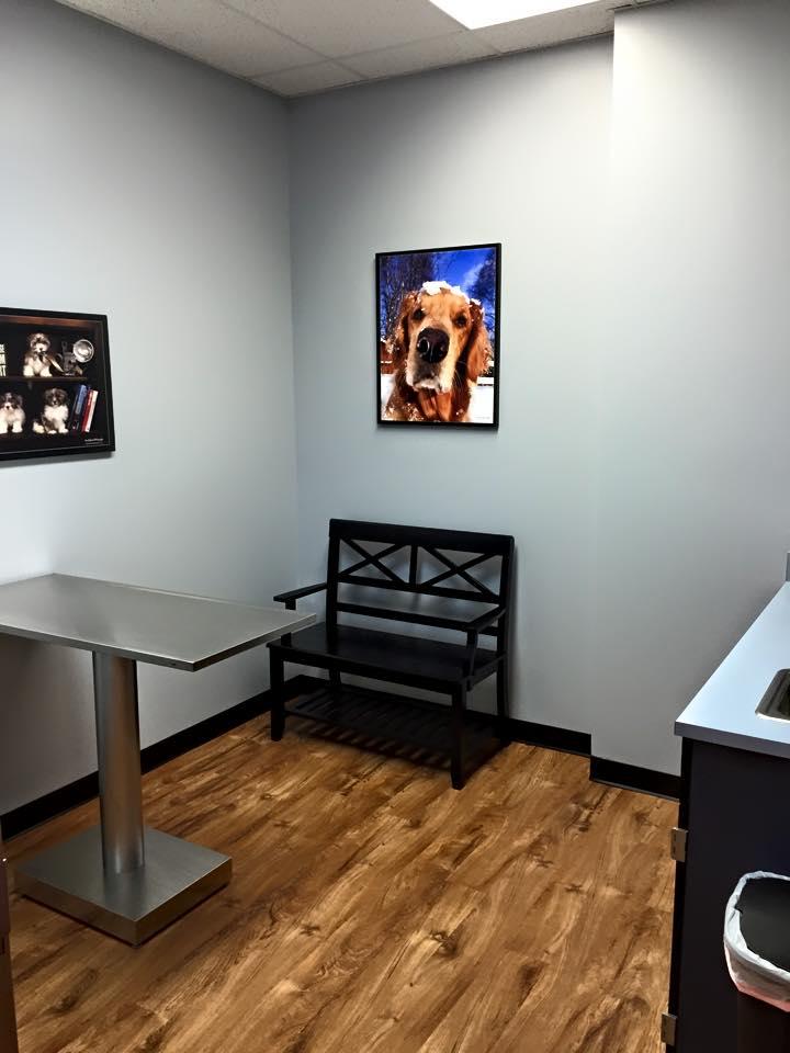 Exam Room 3 - dogs.jpg