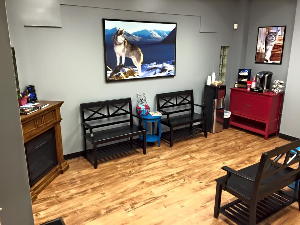 """Front lobby of Alaska Affordable Veterinary Care - featuring 13+ year old """"Diva."""""""