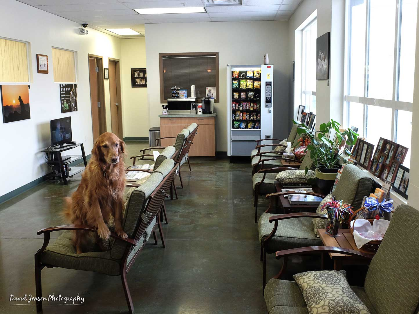 """Layla offers her """"pose of approval"""" at Pet Emergency & Treatment Center after work was completed on the studio's latest art exhibition installation."""