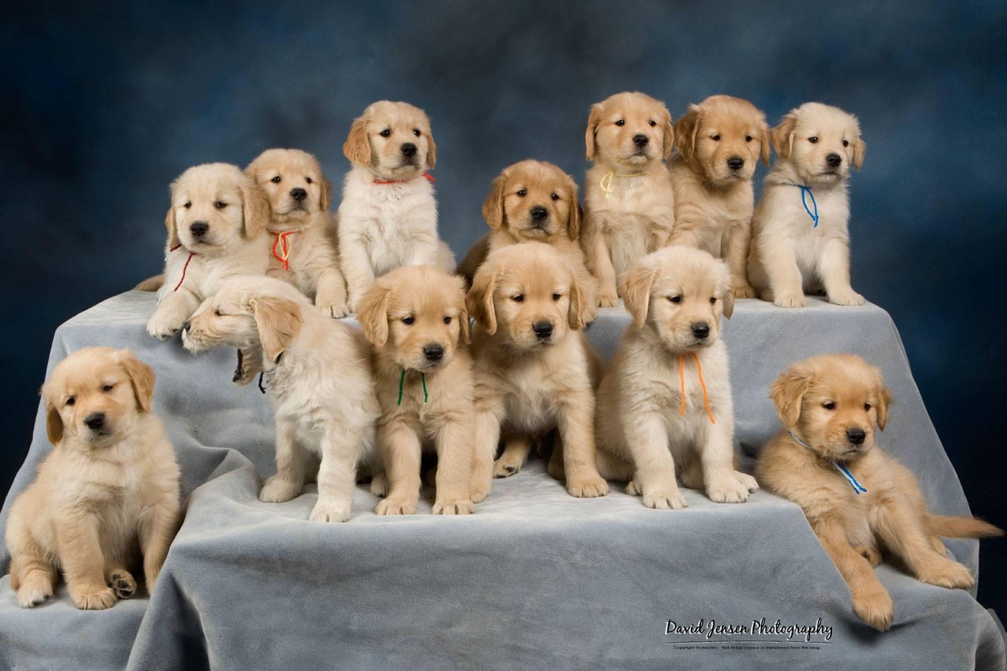 Puppies - first.jpg