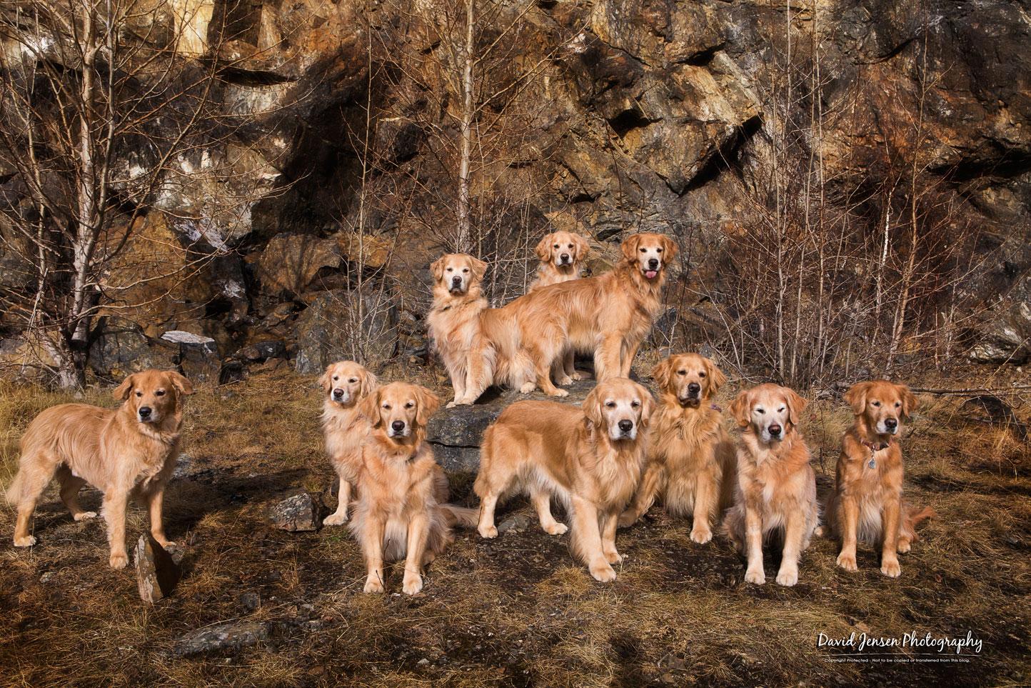 PuppiesUnited.jpg