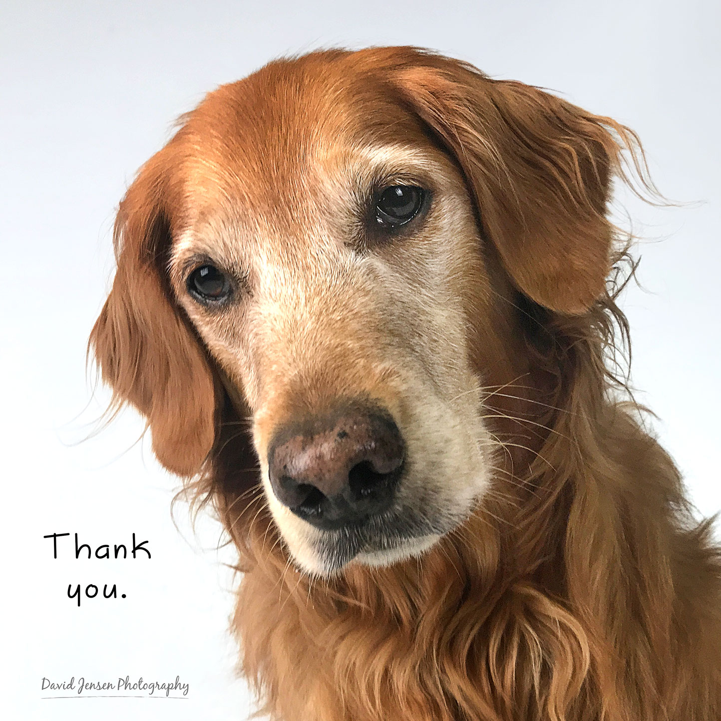 Thank you from the bottom of our hearts and paws.