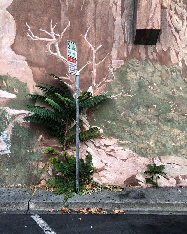 #mural #illusion #2hourparking