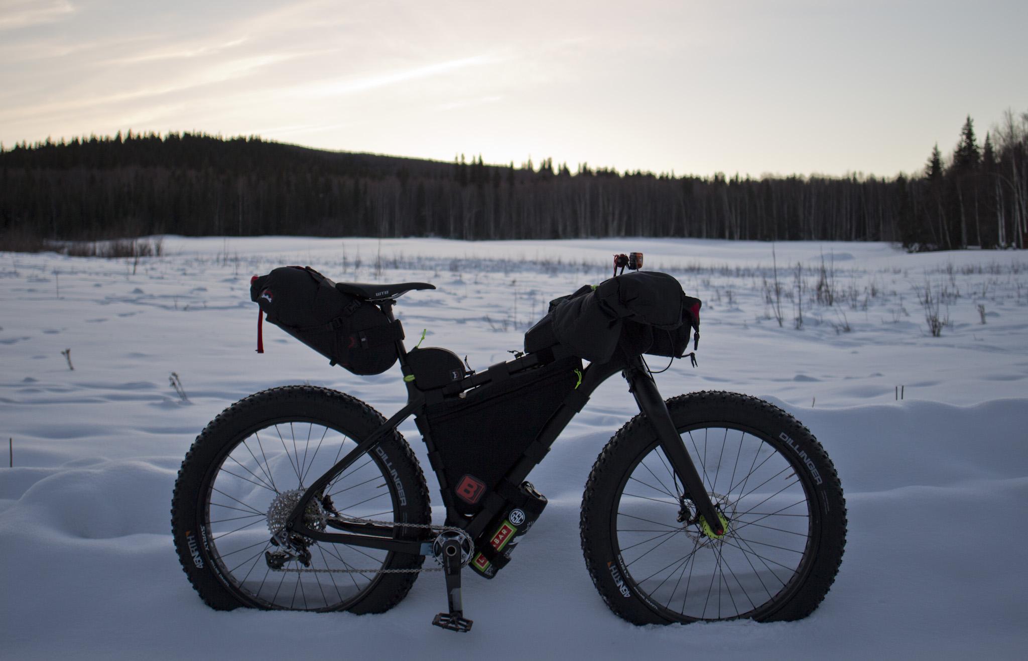 Beargrease enjoying an early evening winter scene. (c) Josh Spice 2014