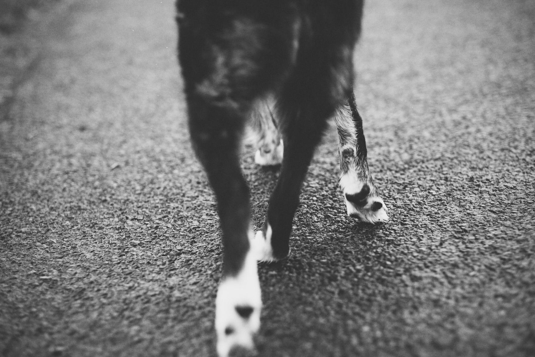 6. Walks