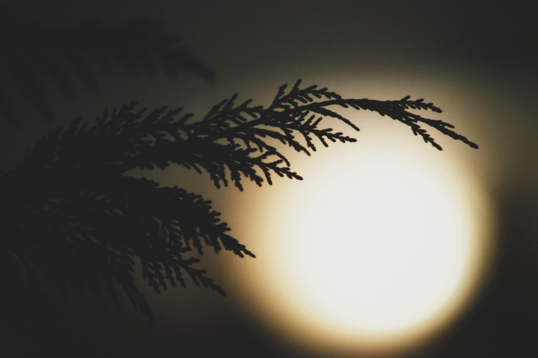 85. Moonrise