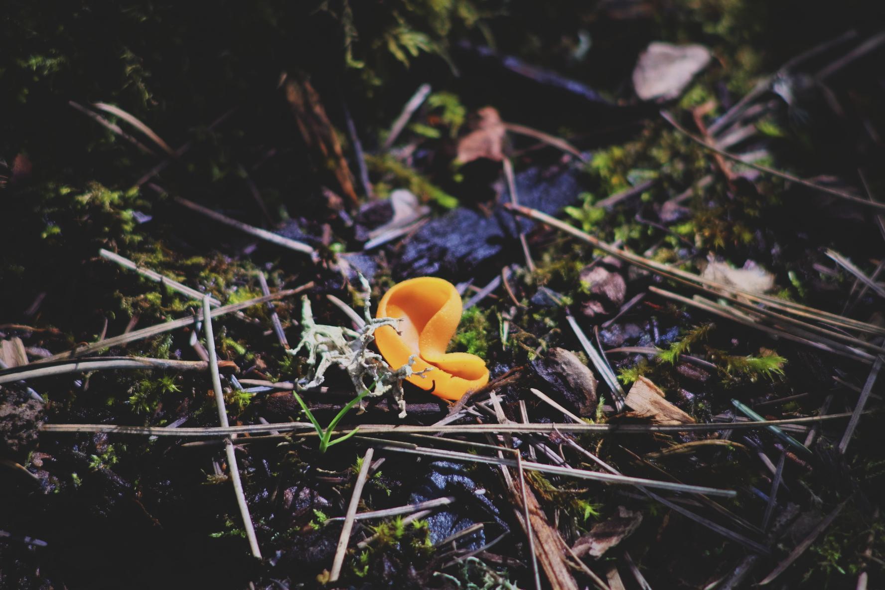 84. A Fungus Amongus