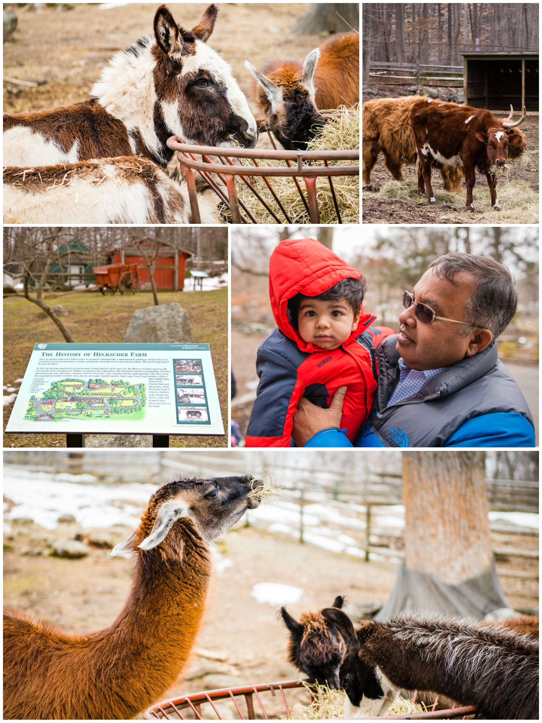 Some shots from Hecksher Farm during feeding time before the party.