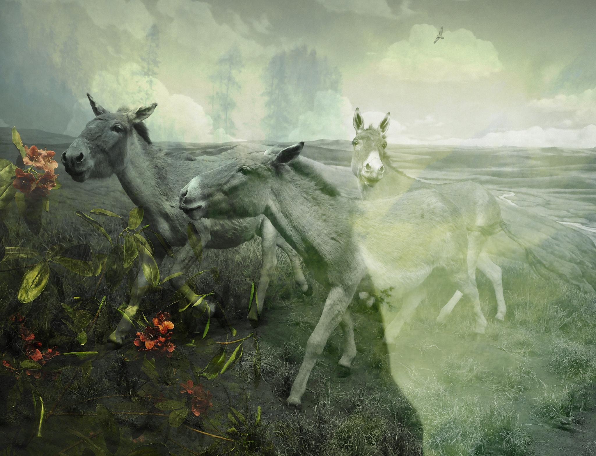 Plains of Apparition I
