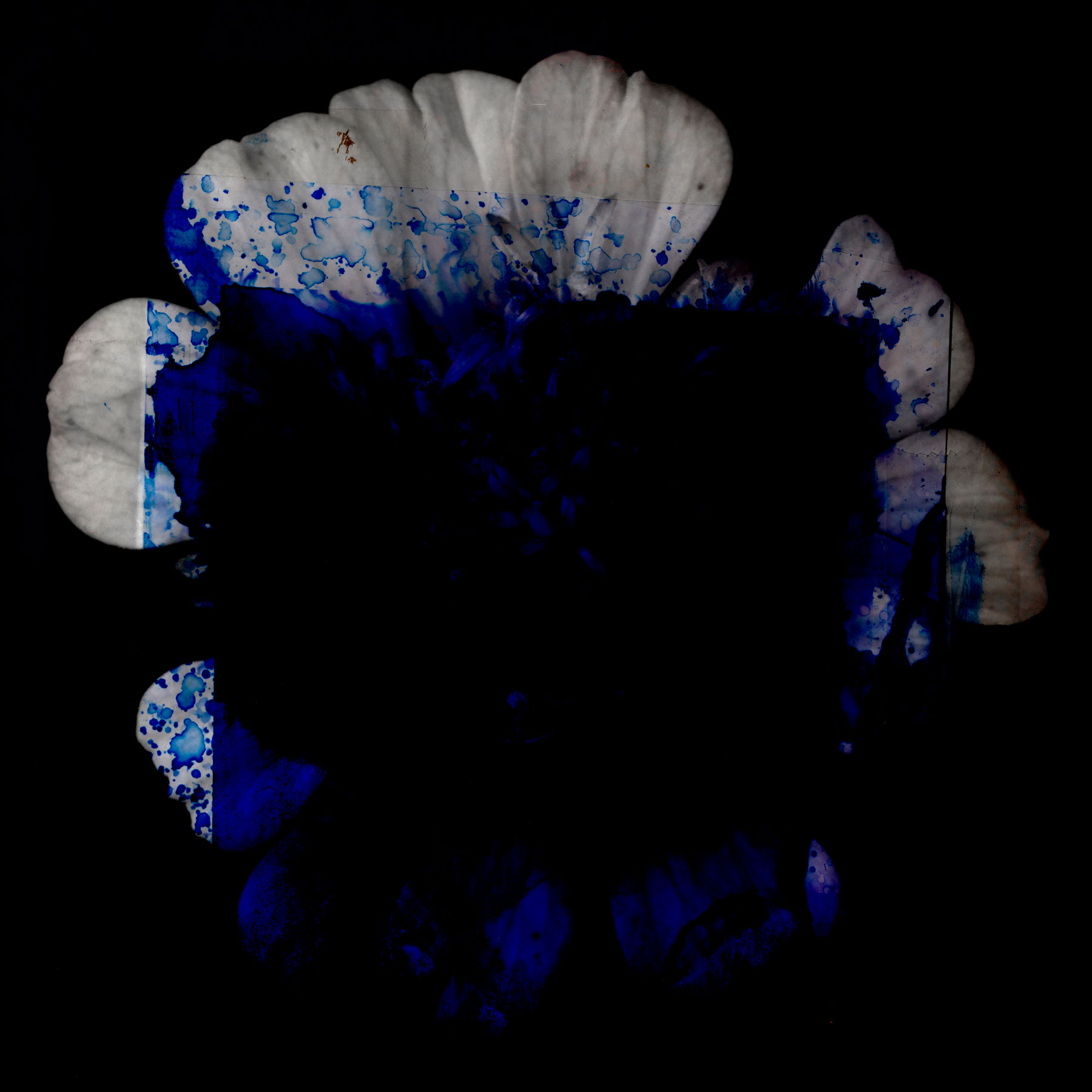 Chemical-Spirit-Flower-series_2019.jpg