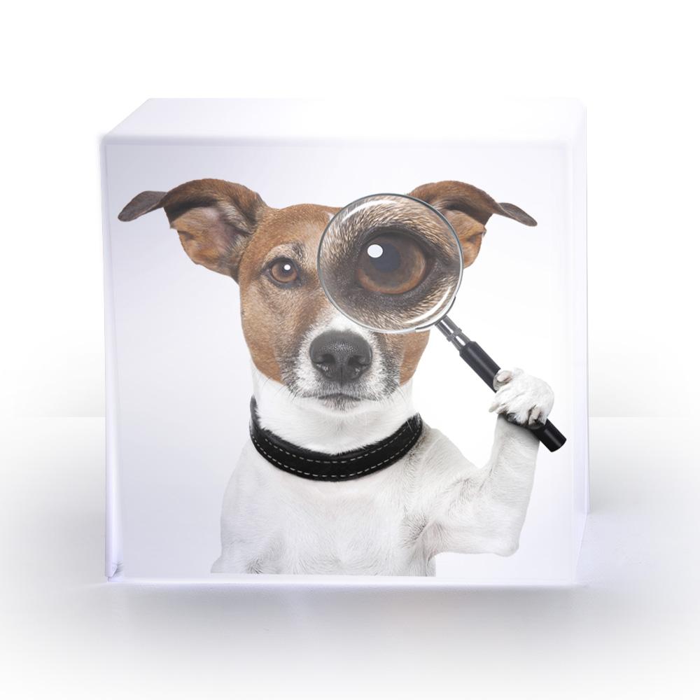 LAMPE cube chien.jpg