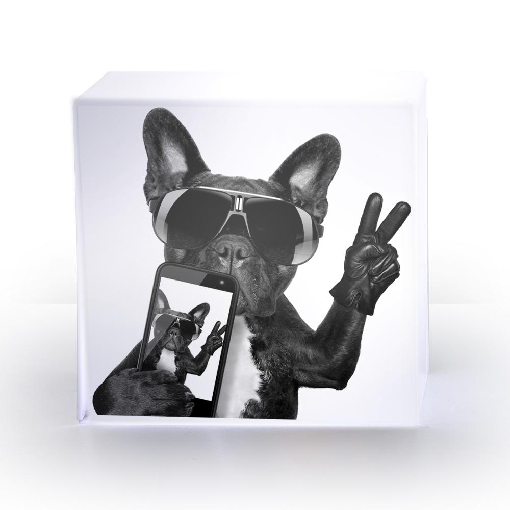 LAMPE cube dogphone.jpg