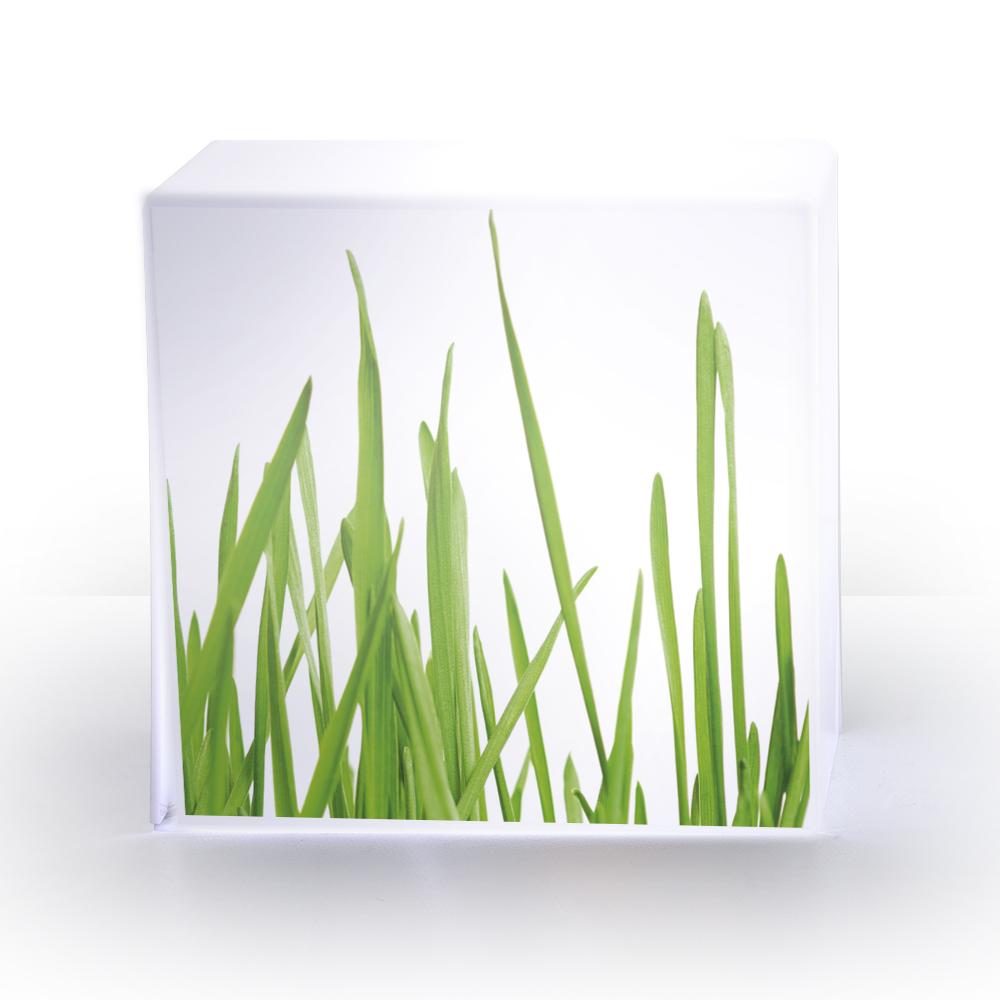 LAMPE cube herbe.jpg