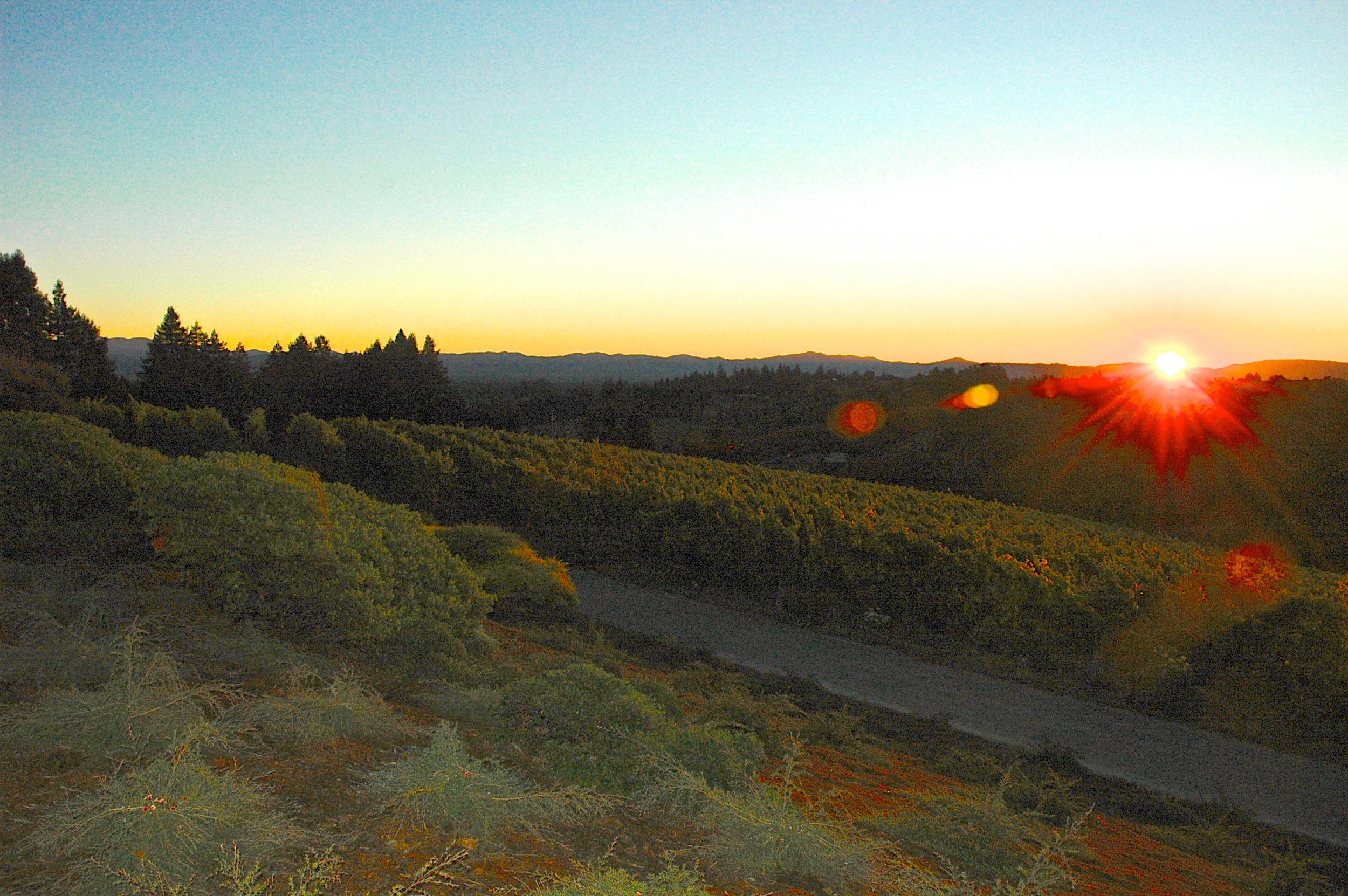 Sunrise at Hawk Hill Vineyard
