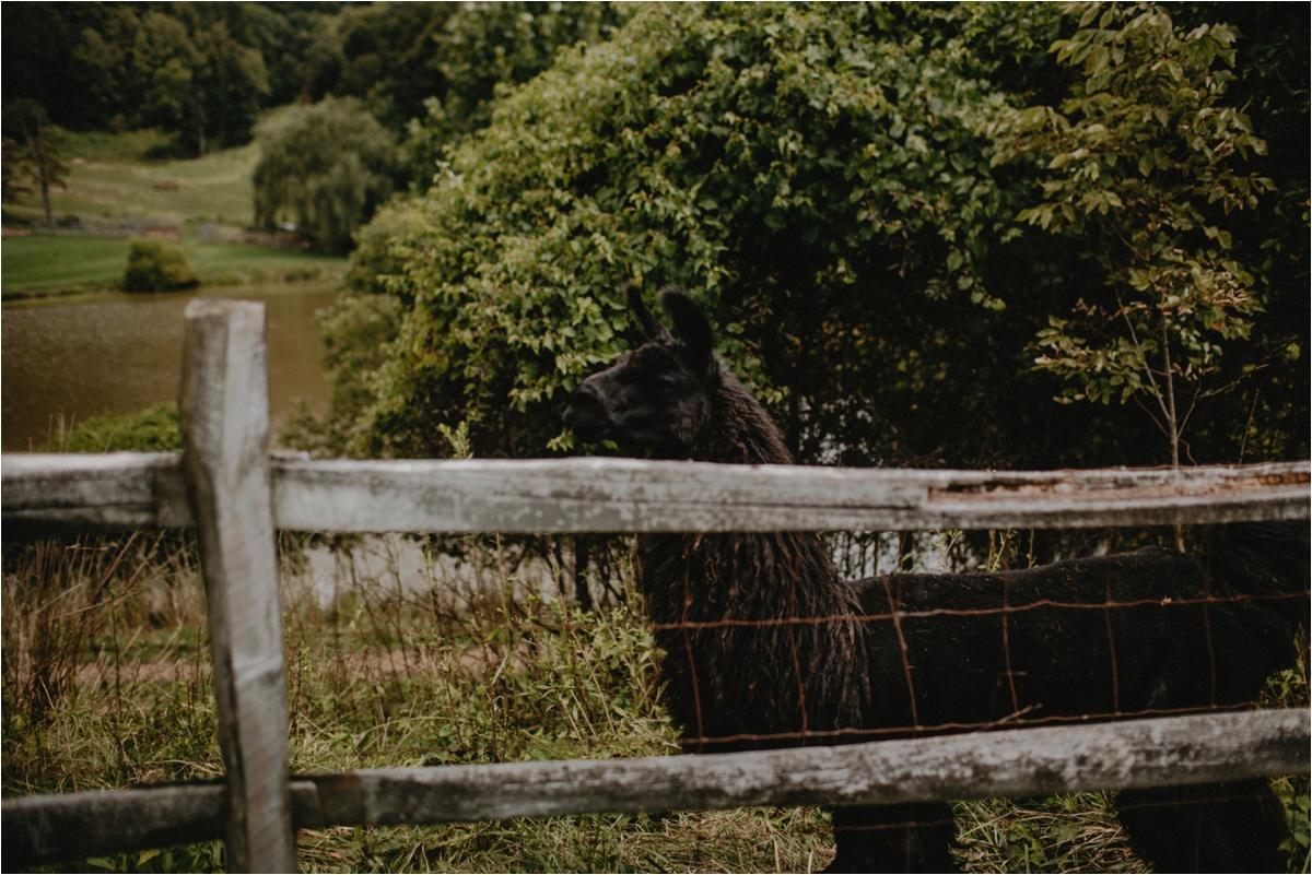claxton-farm-summer-intimate-wedding-asheville_0004.jpg