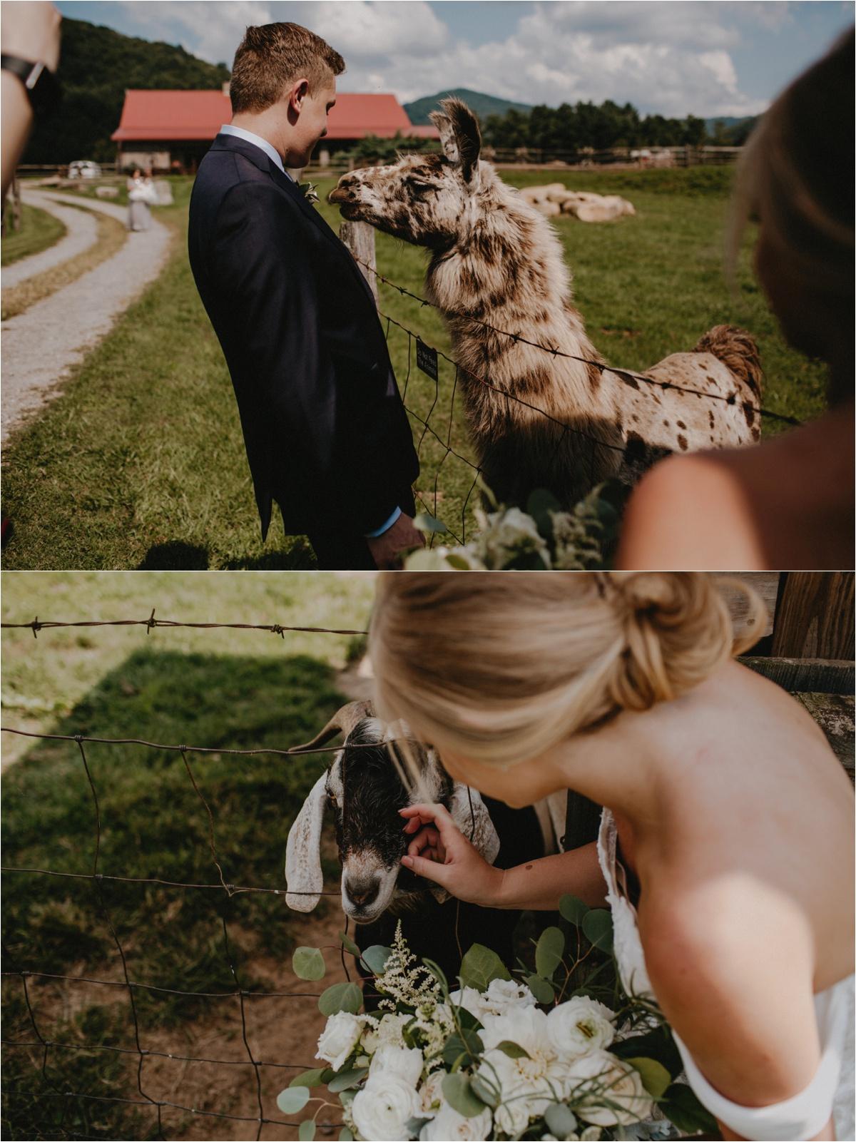 claxton-farm-summer-intimate-wedding-asheville_0061.jpg