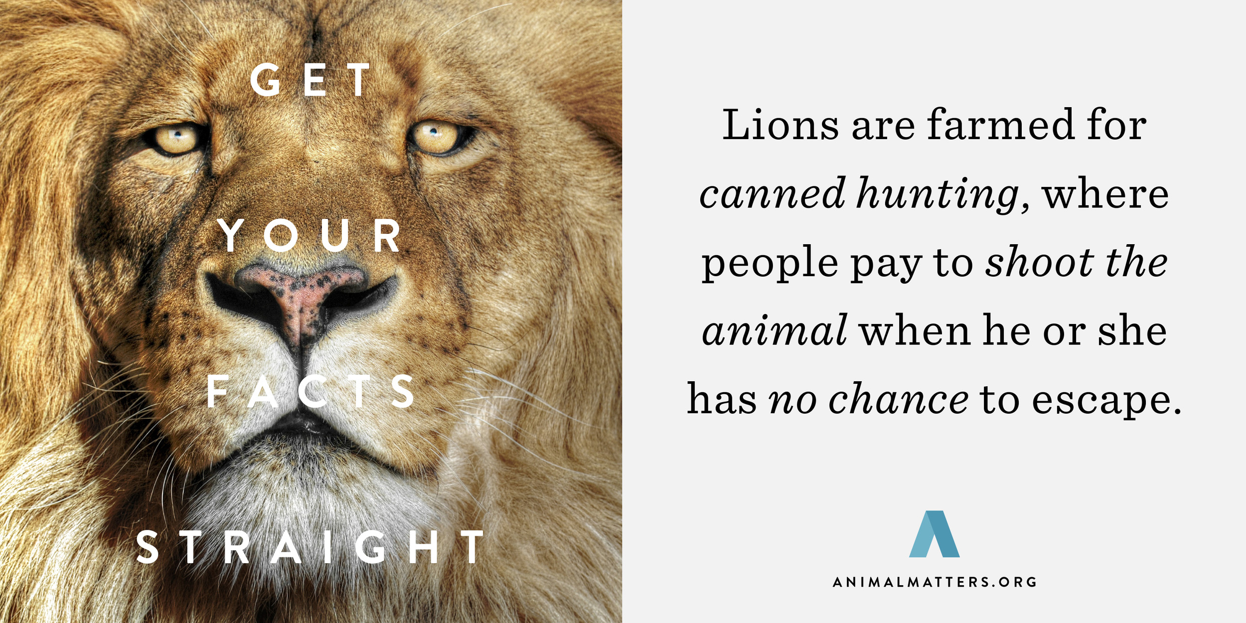 Lion-Canned-Hunting-Statistic