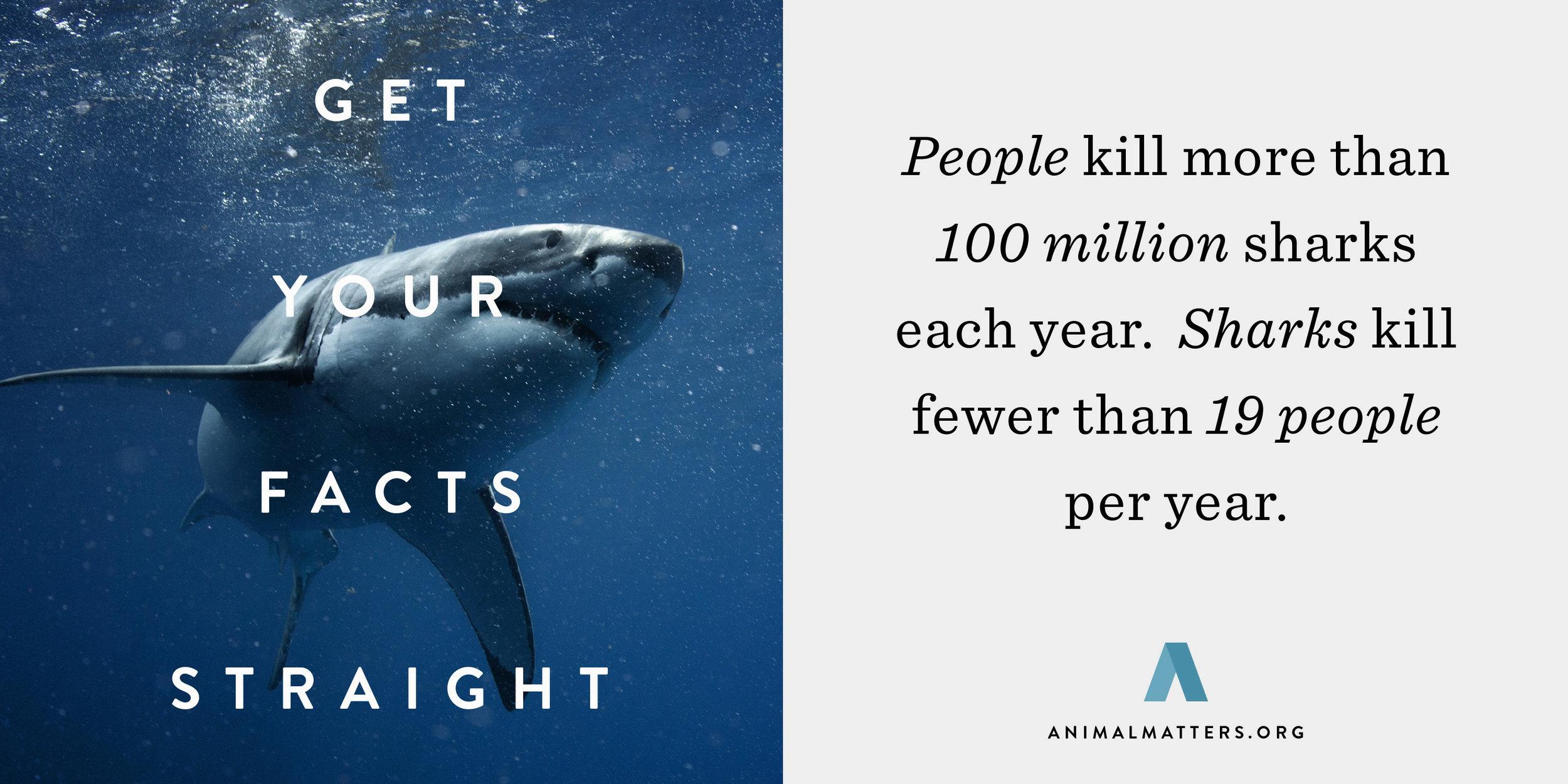 Animal-Matters-Shark-Attack-Fact.jpg