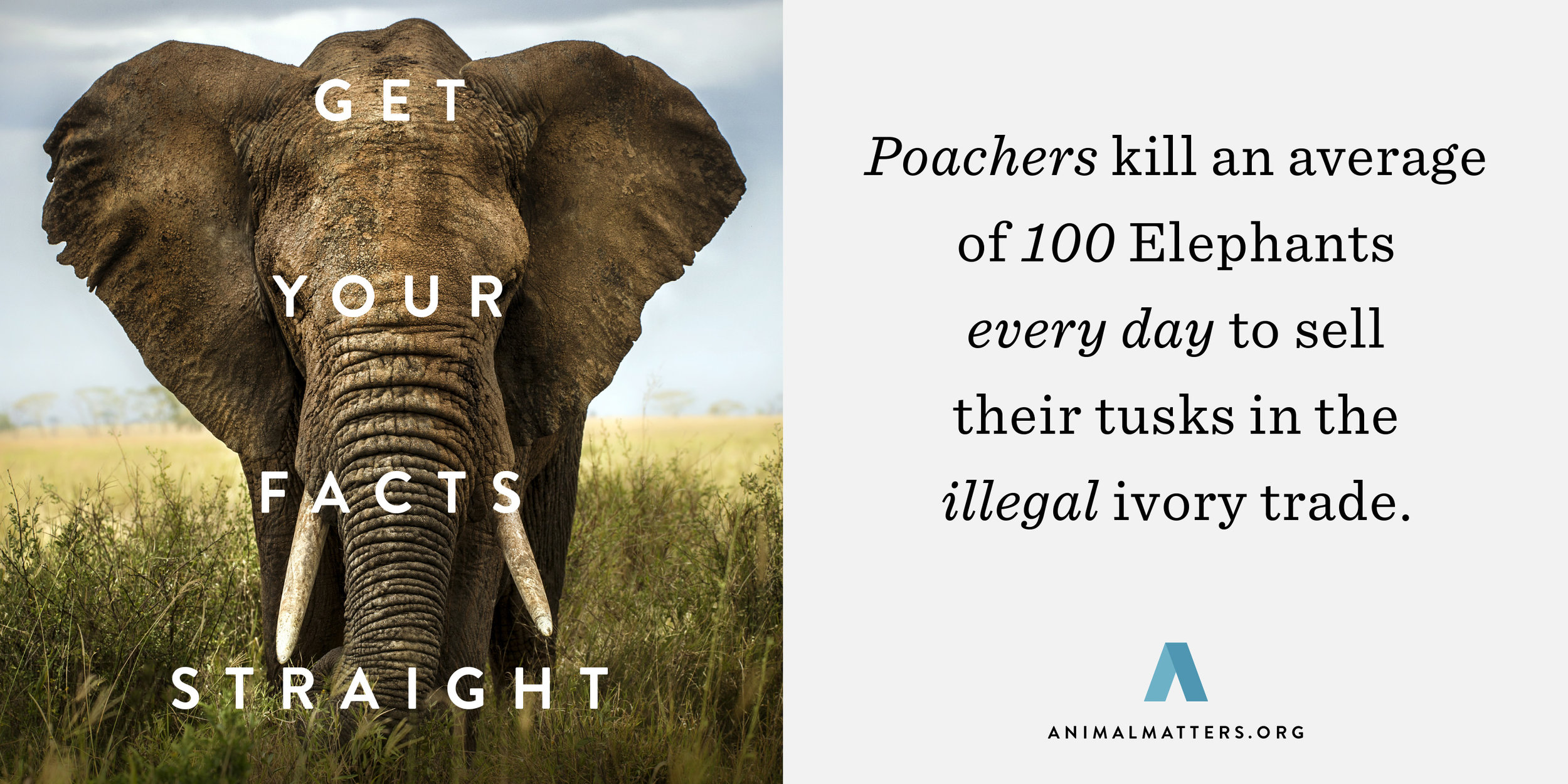 Elephant-Poaching-Statistic.jpg