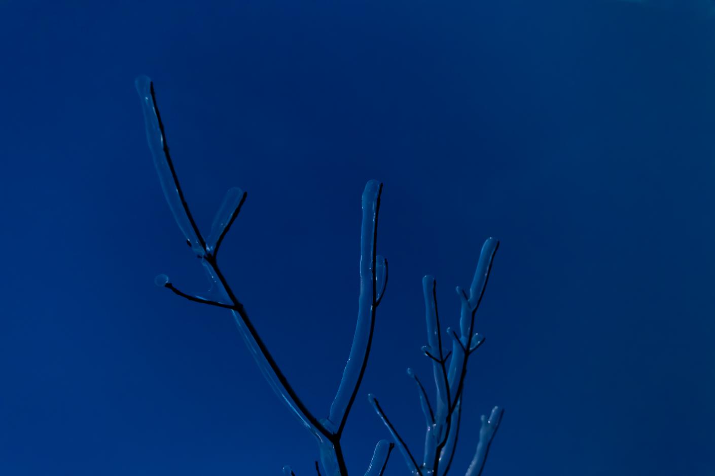 Treetop, Ice