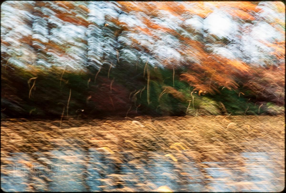 Pine Needles Falling On Lake