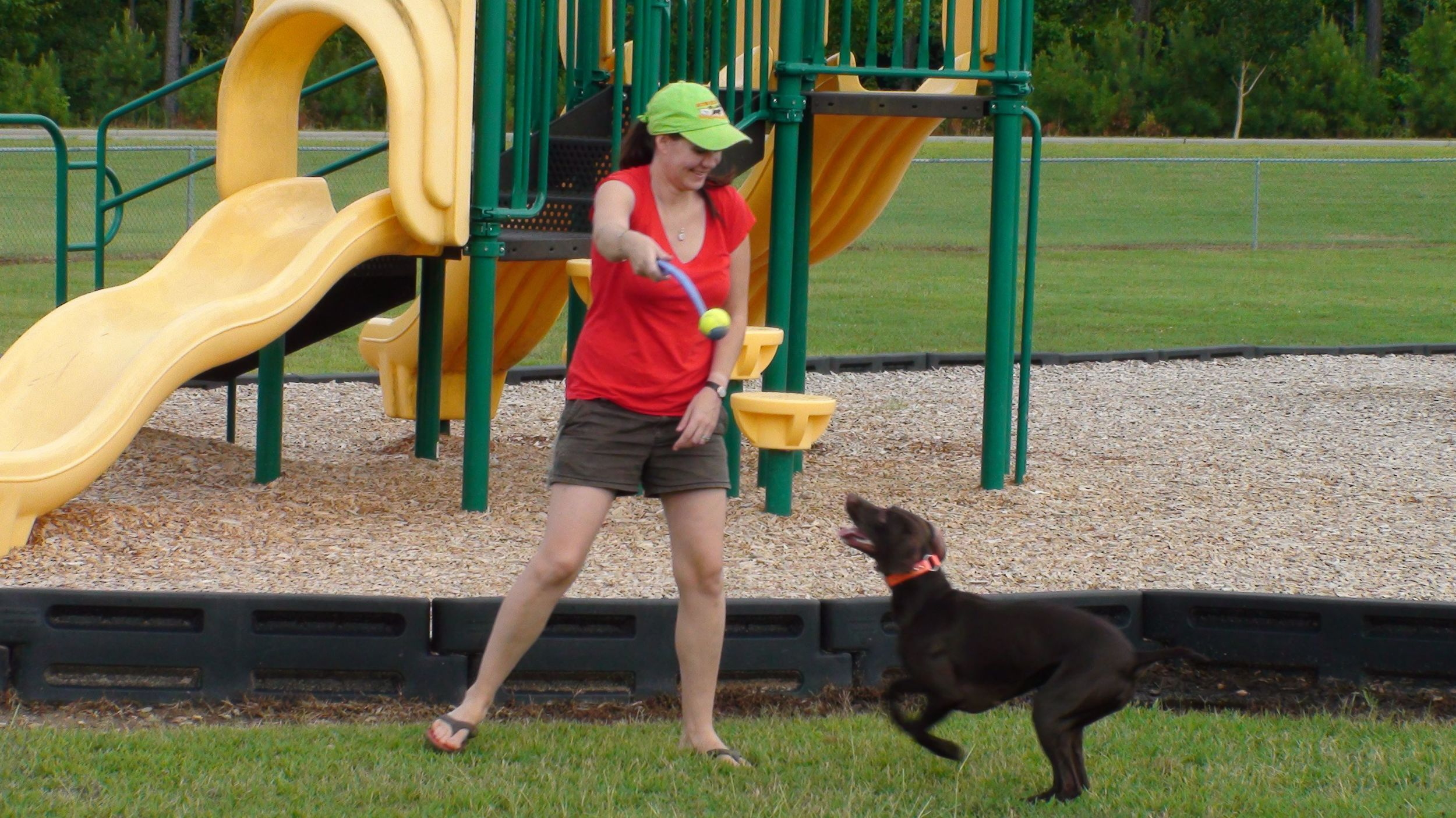 Keeping it fun and interesting for both dog and trainer is key . Here, Chatter is practicing fetch as well as learning about obstacles and how to maneuver through and on them.