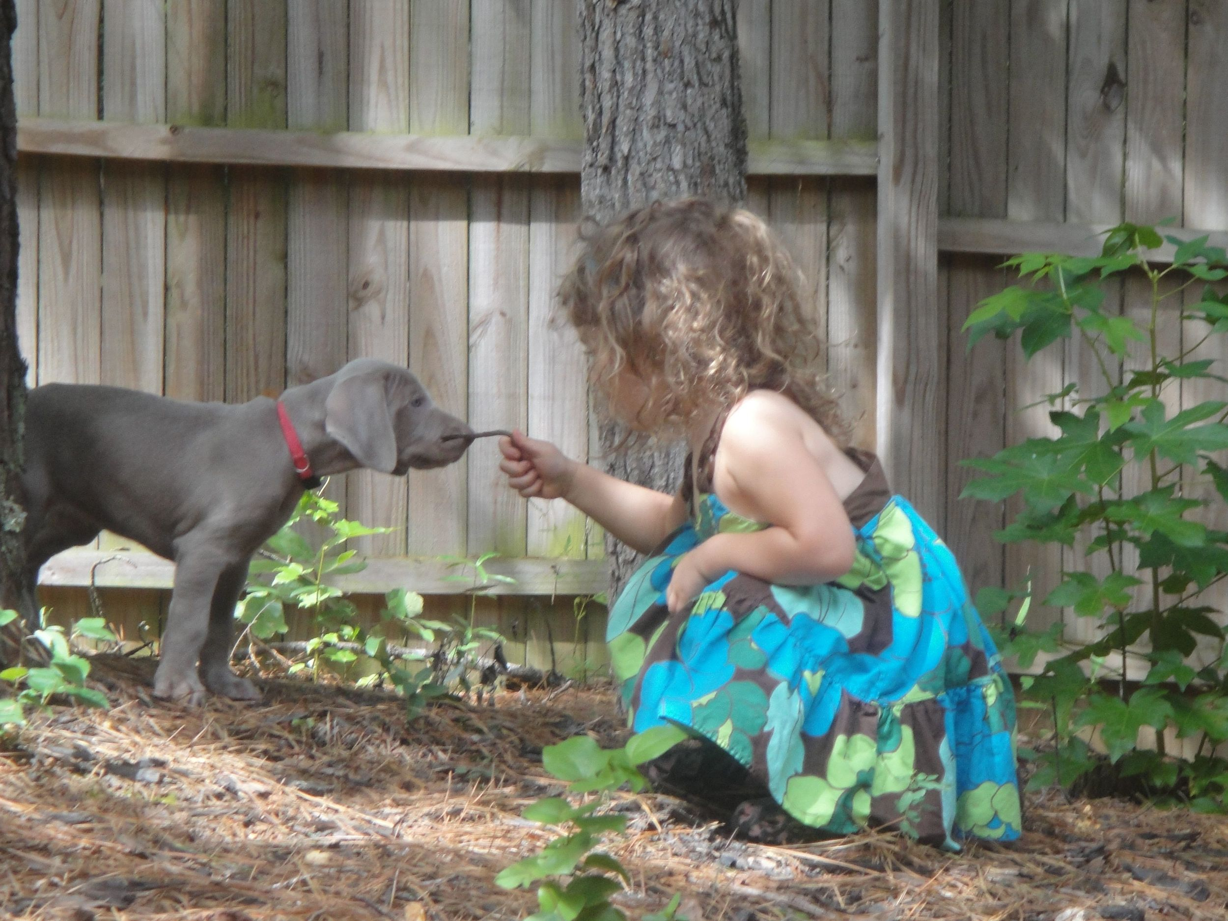 Teaching dogs at a young age where their place is within the pack is essential because none to soon this puppy will be twice the size of this child and NO ONE likes to see a child knocked over by a wild ill behaved dog.