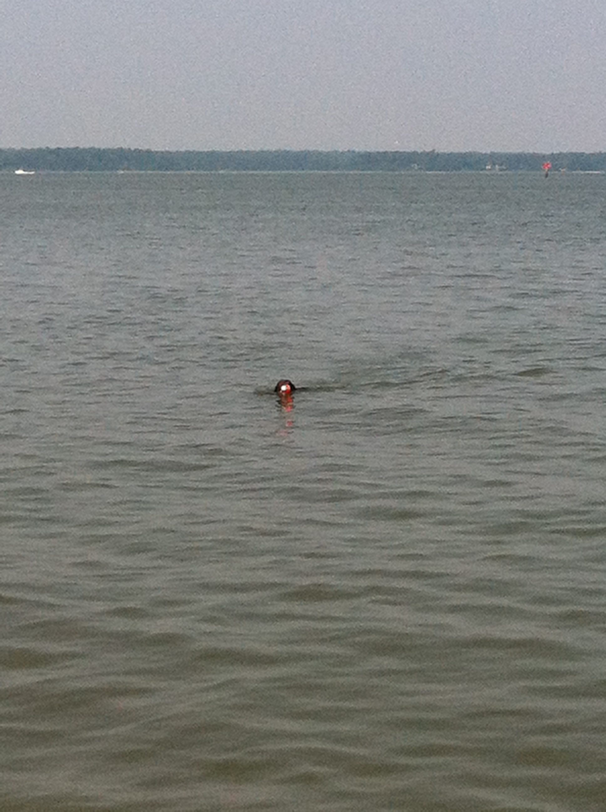 Swimming and long distance retrieves build determination and stamina in young dogs.