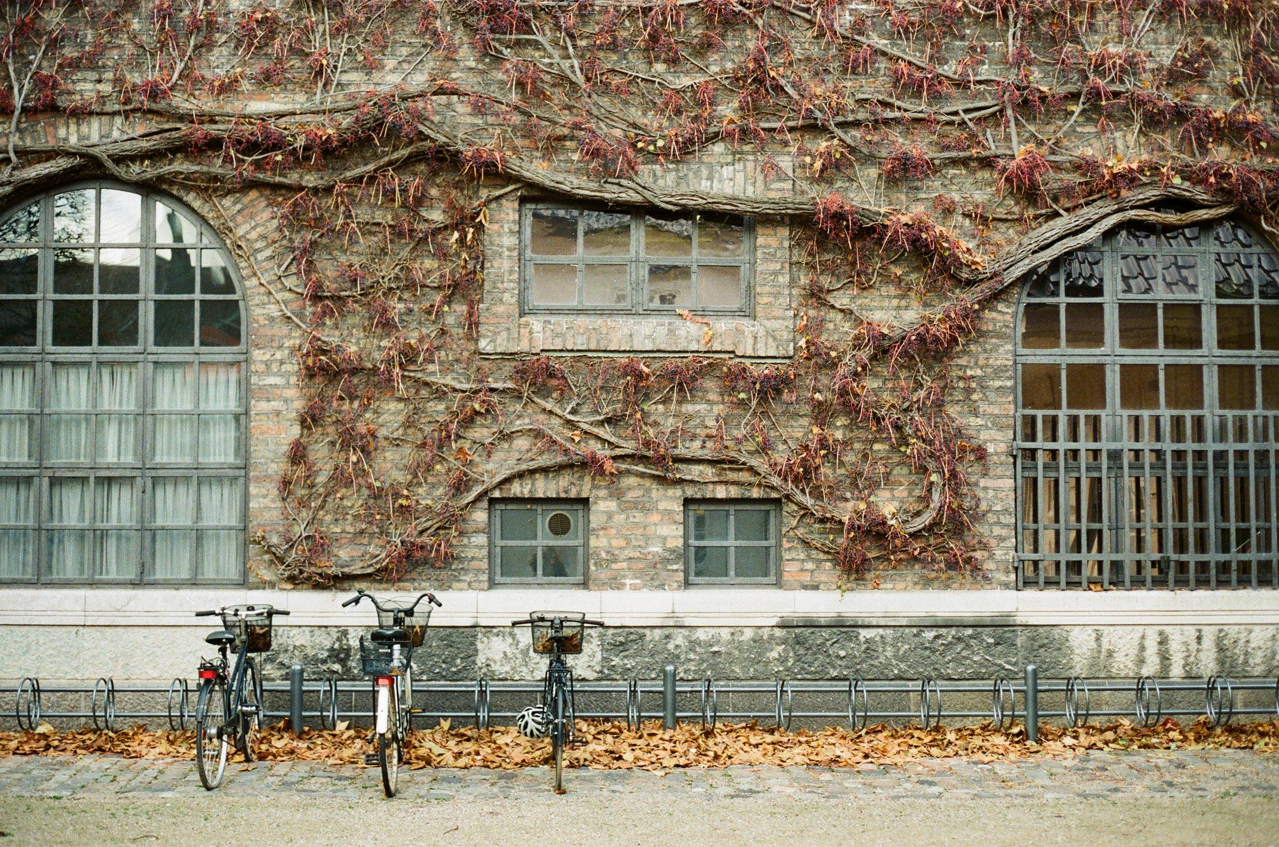 Copenhagen Bikes.jpg