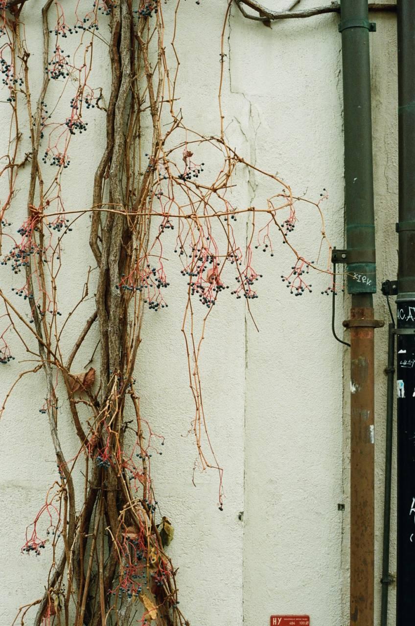 Basel Alley.jpg