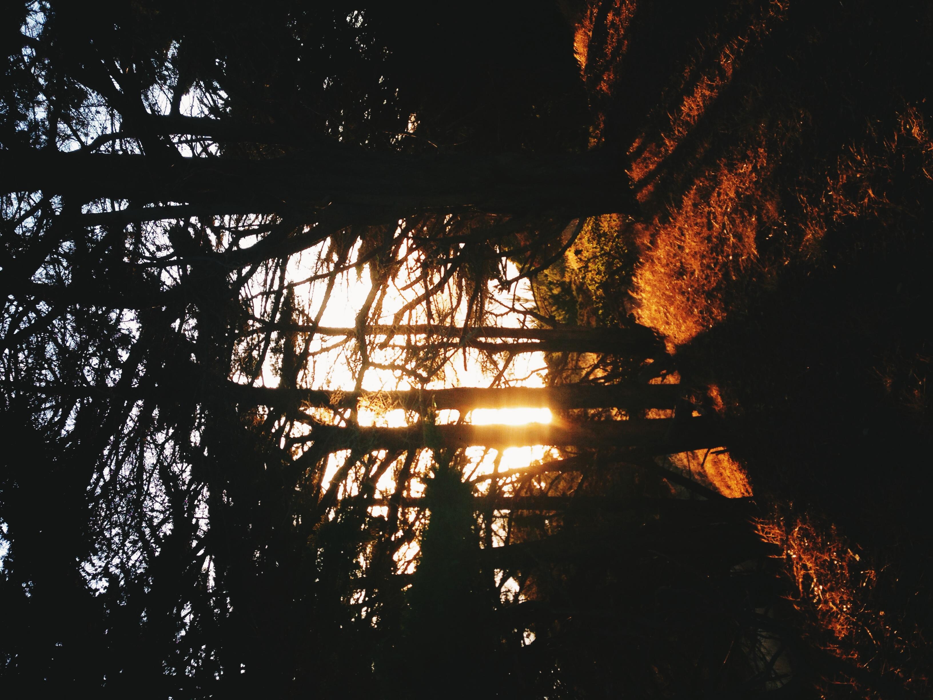 Sun through the trees, Angel Island