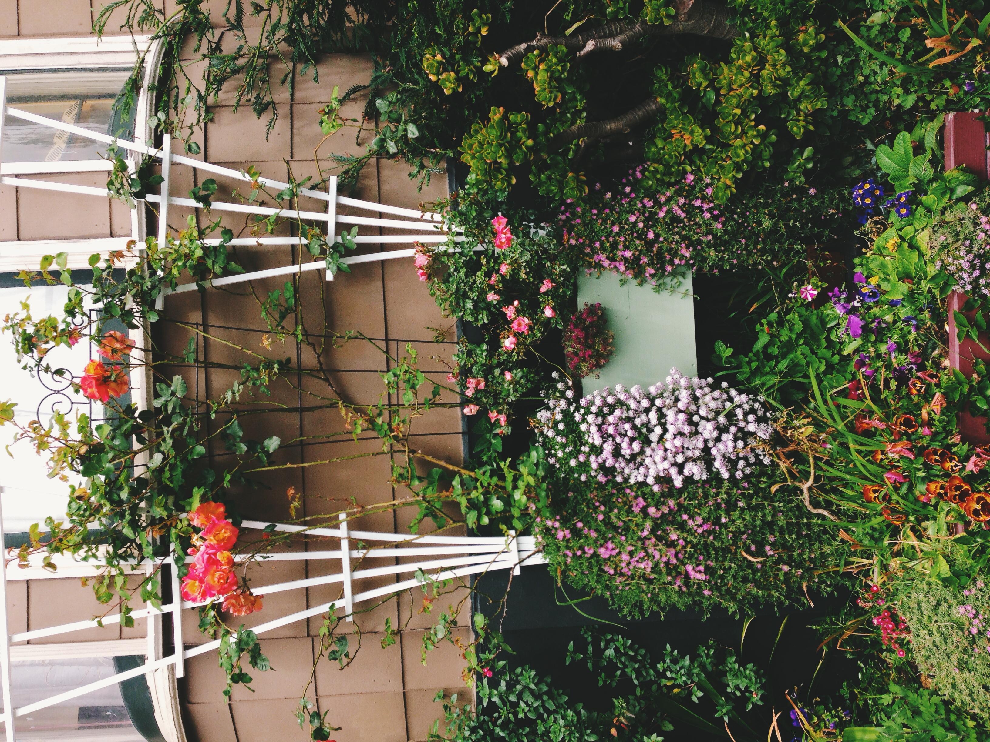 A beautiful homefront garden near Alamo Square