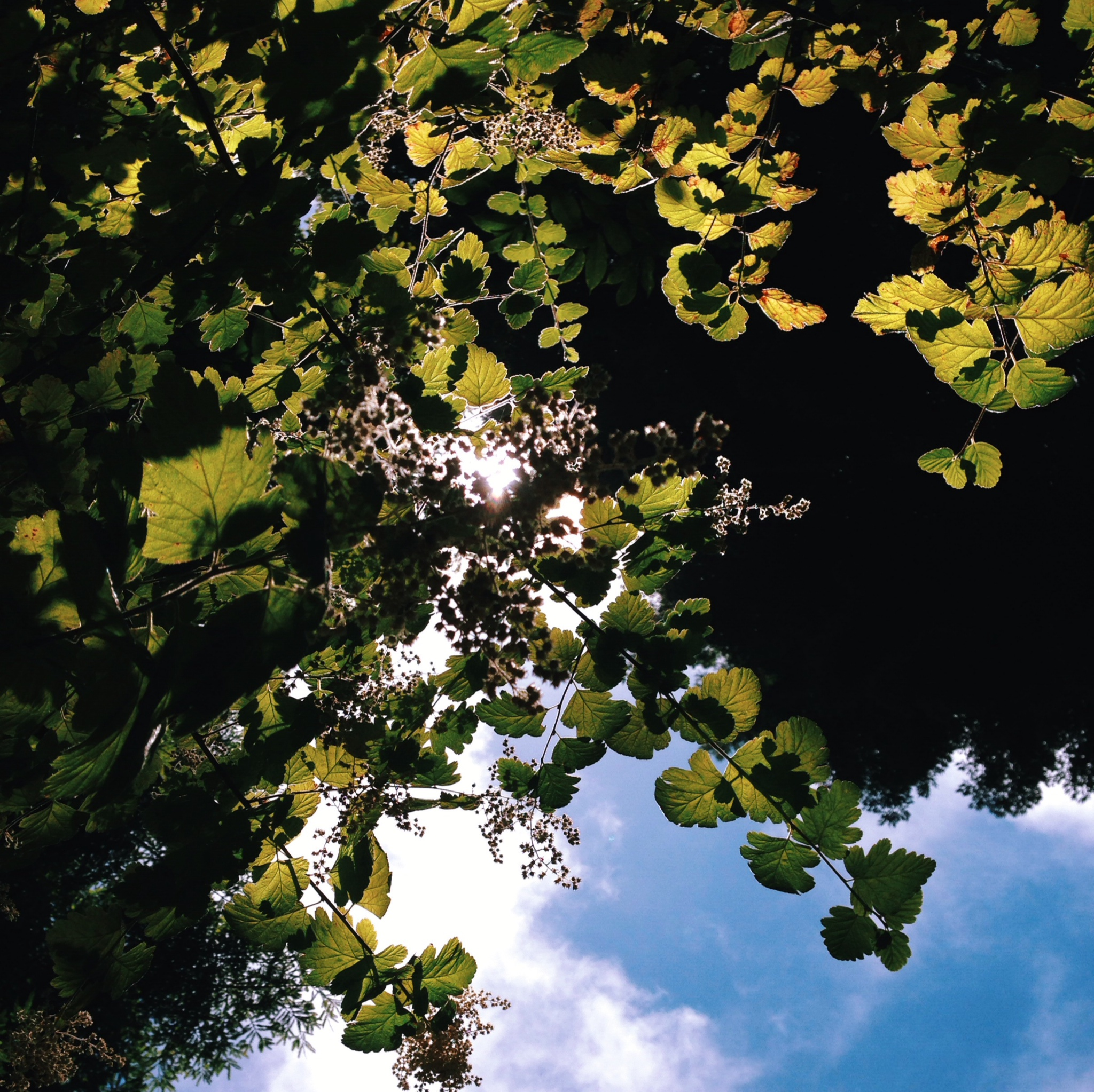 Sunlight through the trees in the Botanic Gardens