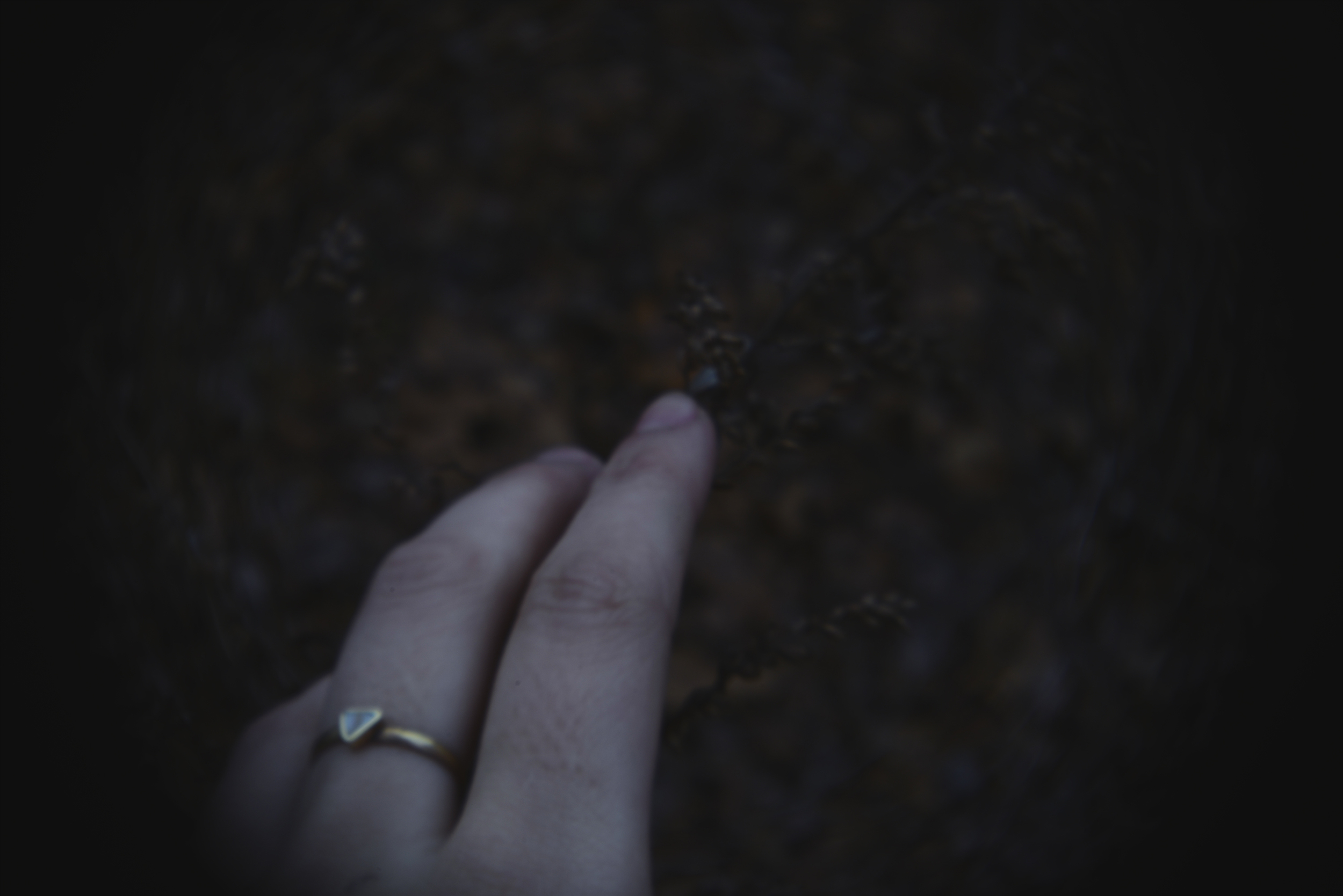 glen echo holga lens ring3.jpg