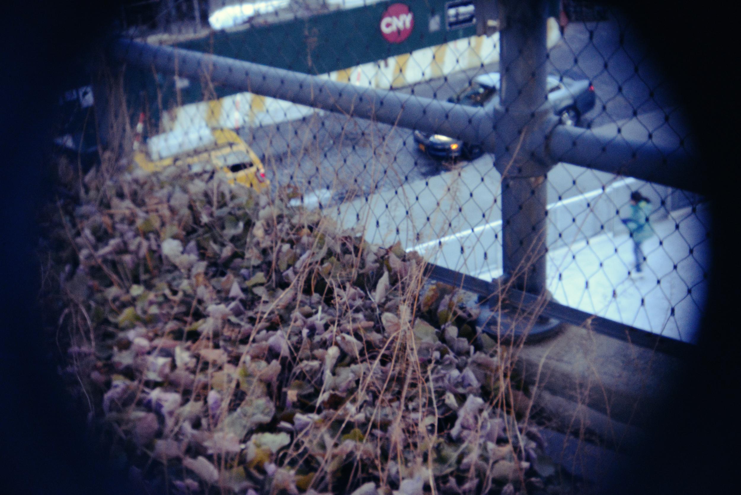 NYC highline holga lens 7.jpg
