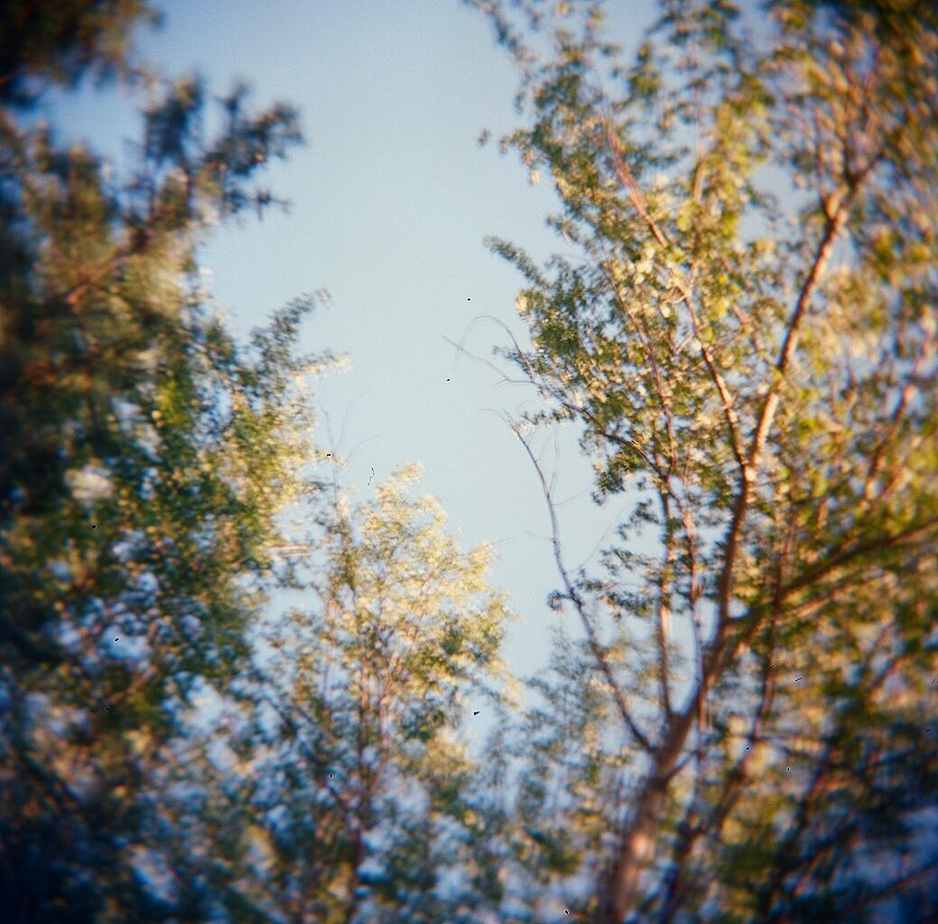 holga tree blur.jpg