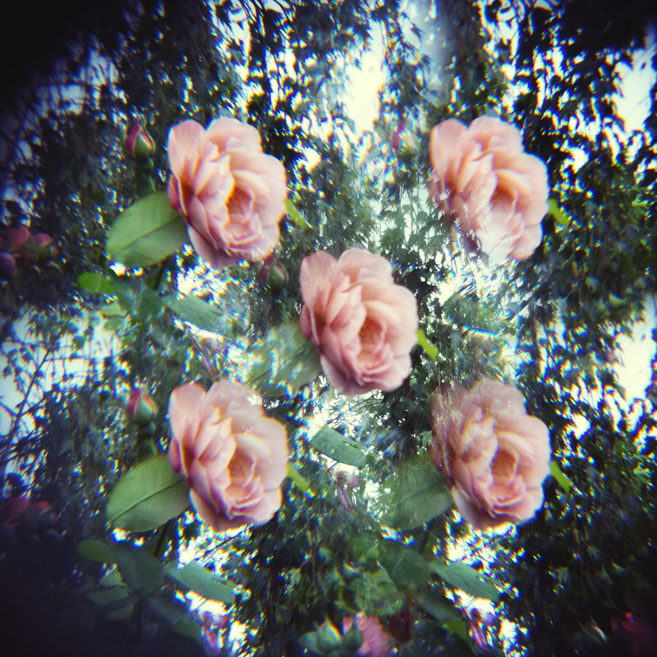 holga lens flowers (15 of 30).jpg