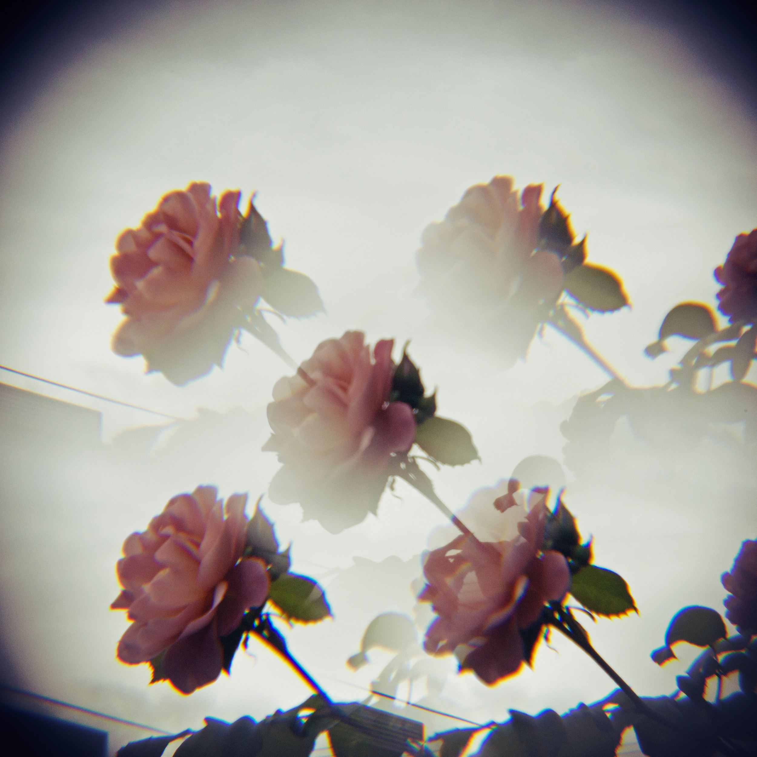 holga lens flowers (20 of 30).jpg