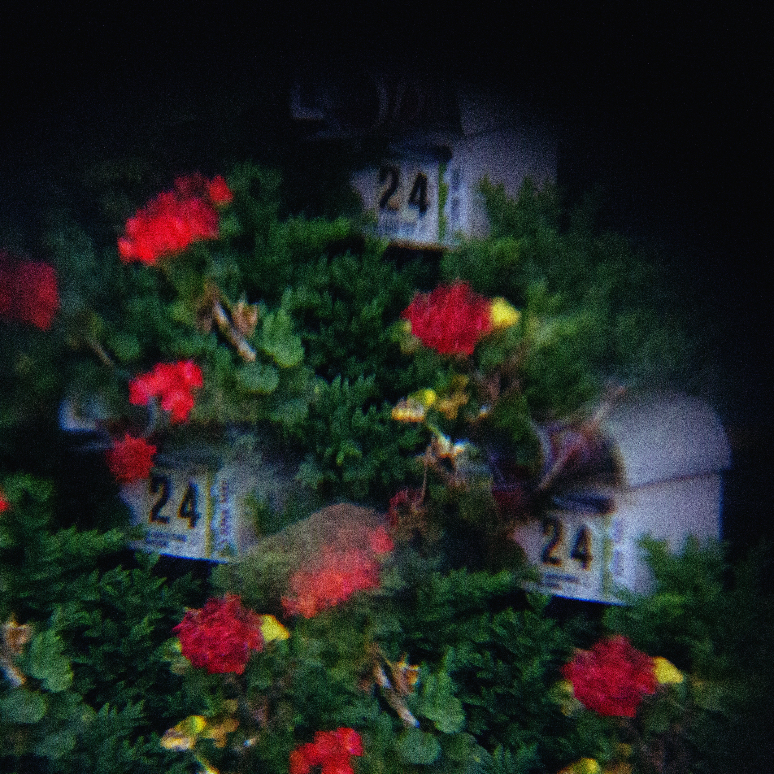 holga lens flowers (6 of 30).jpg