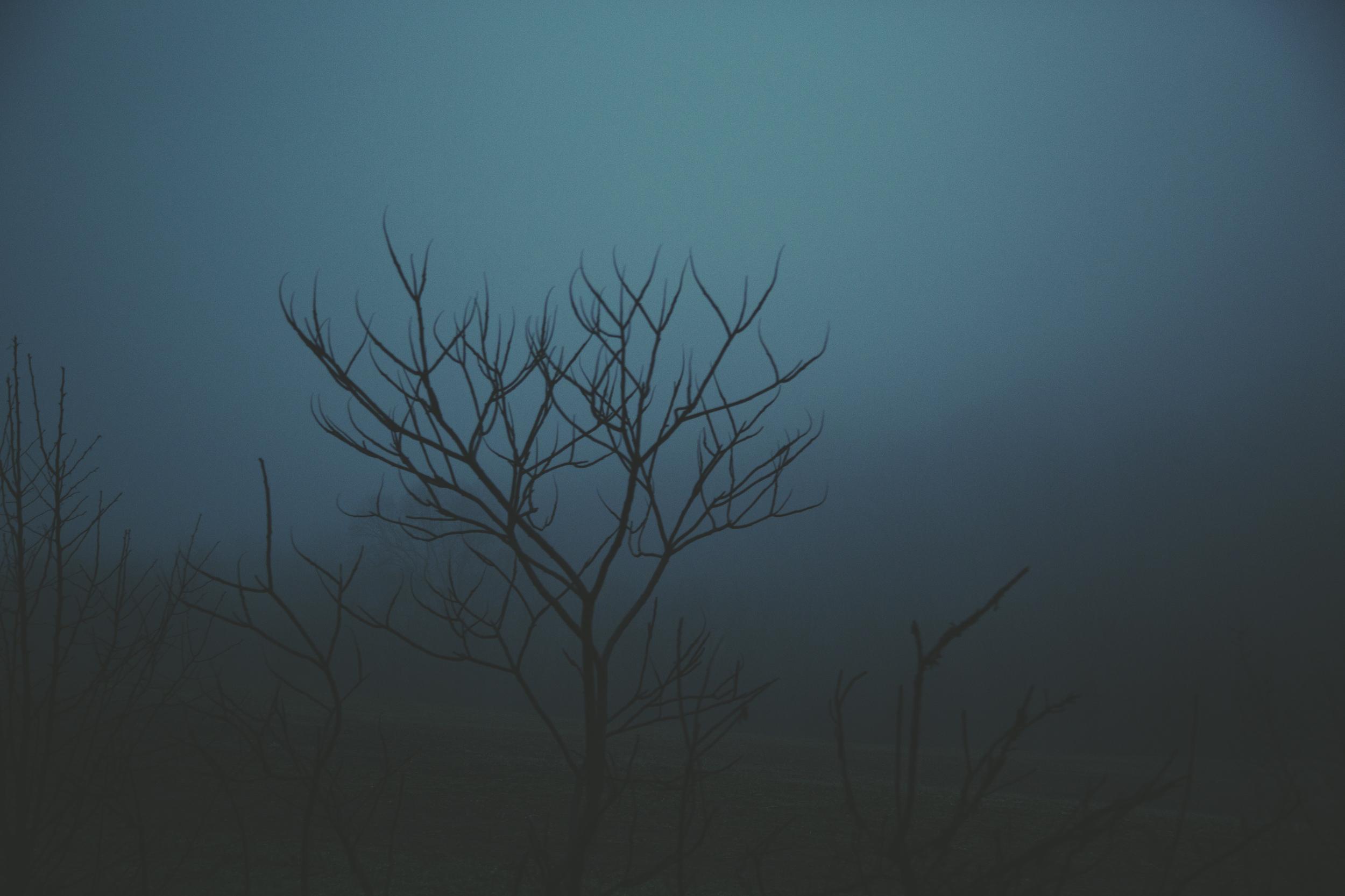 landscape-9.jpg