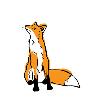 star-gazing fox (illustration sample)