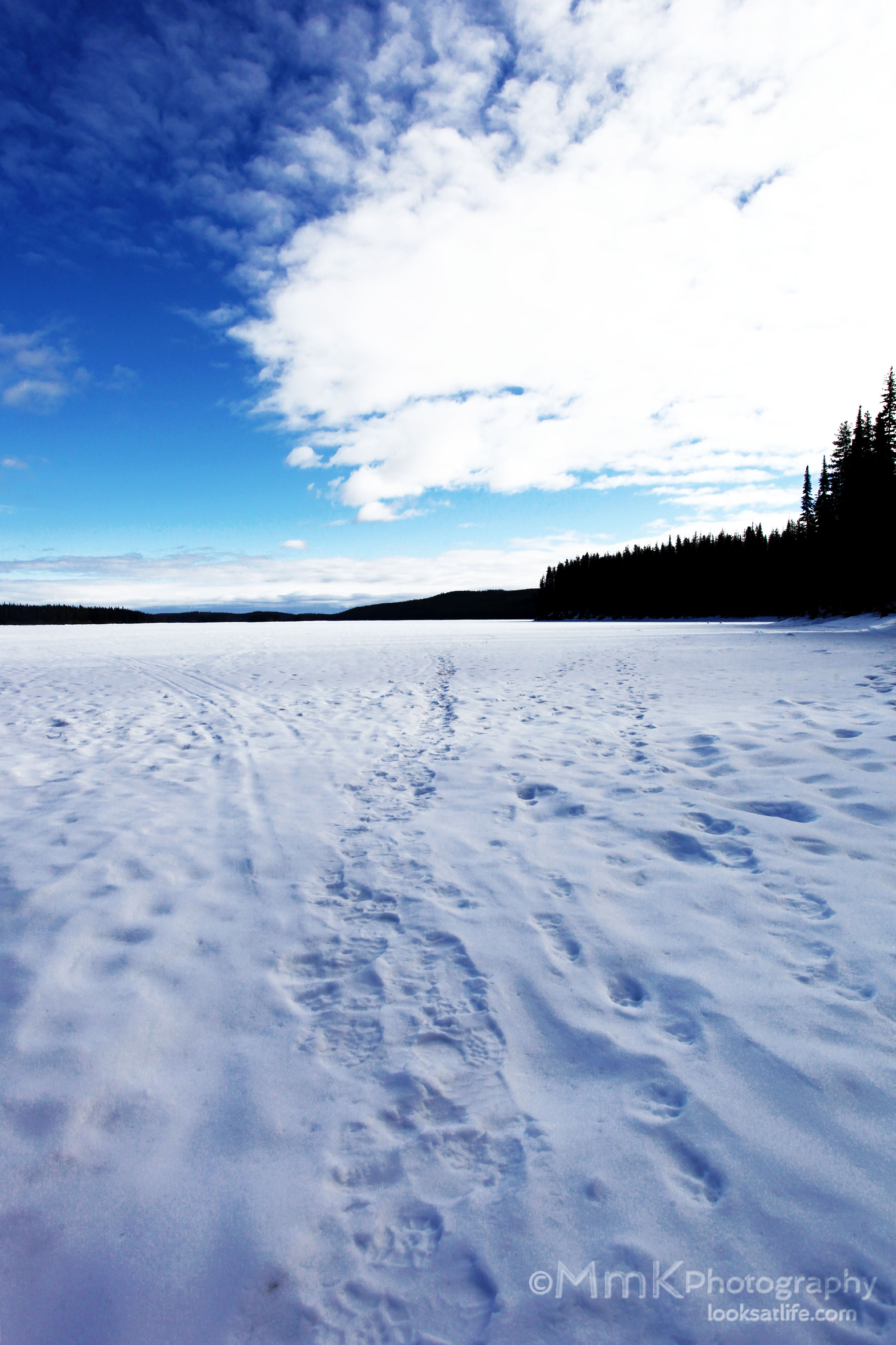 It looks like many ice fishermen, and ice fisher-dogs, havegone out on this lake.