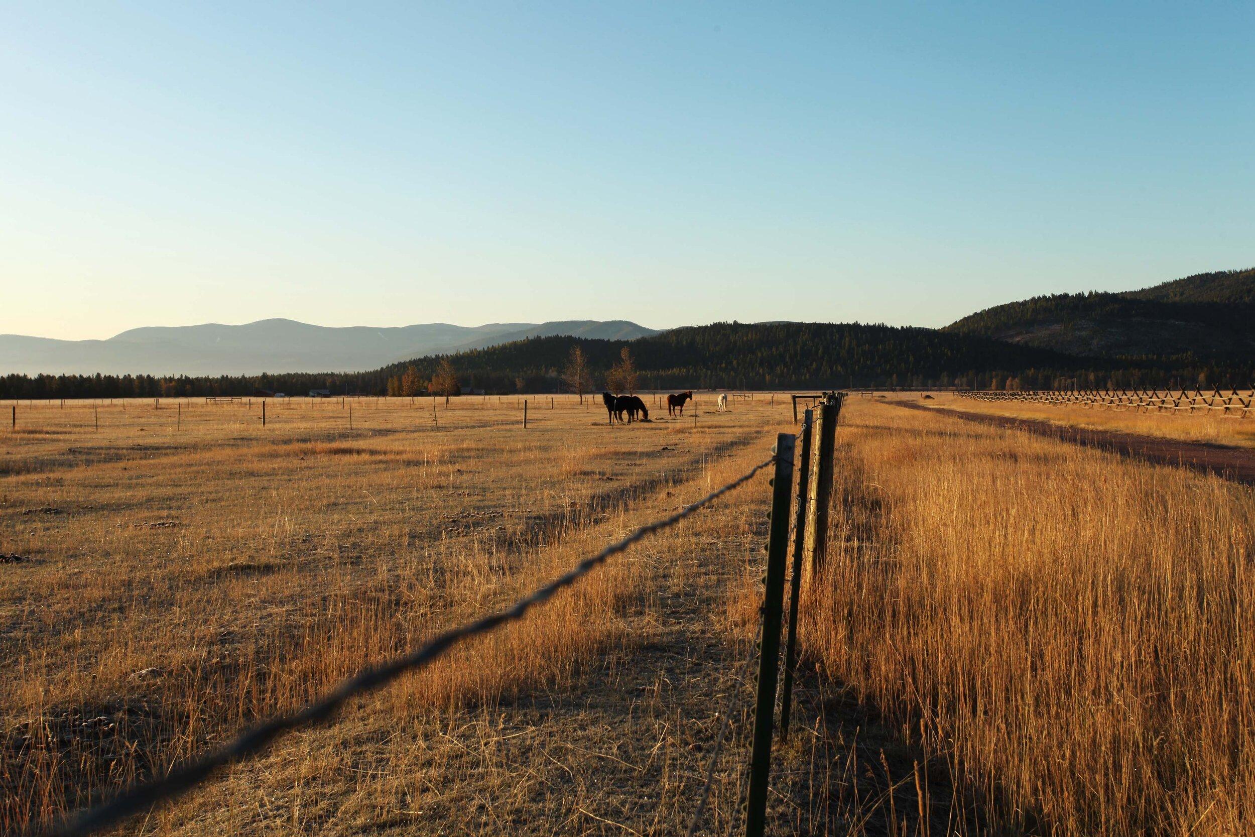 Early morning Montana.