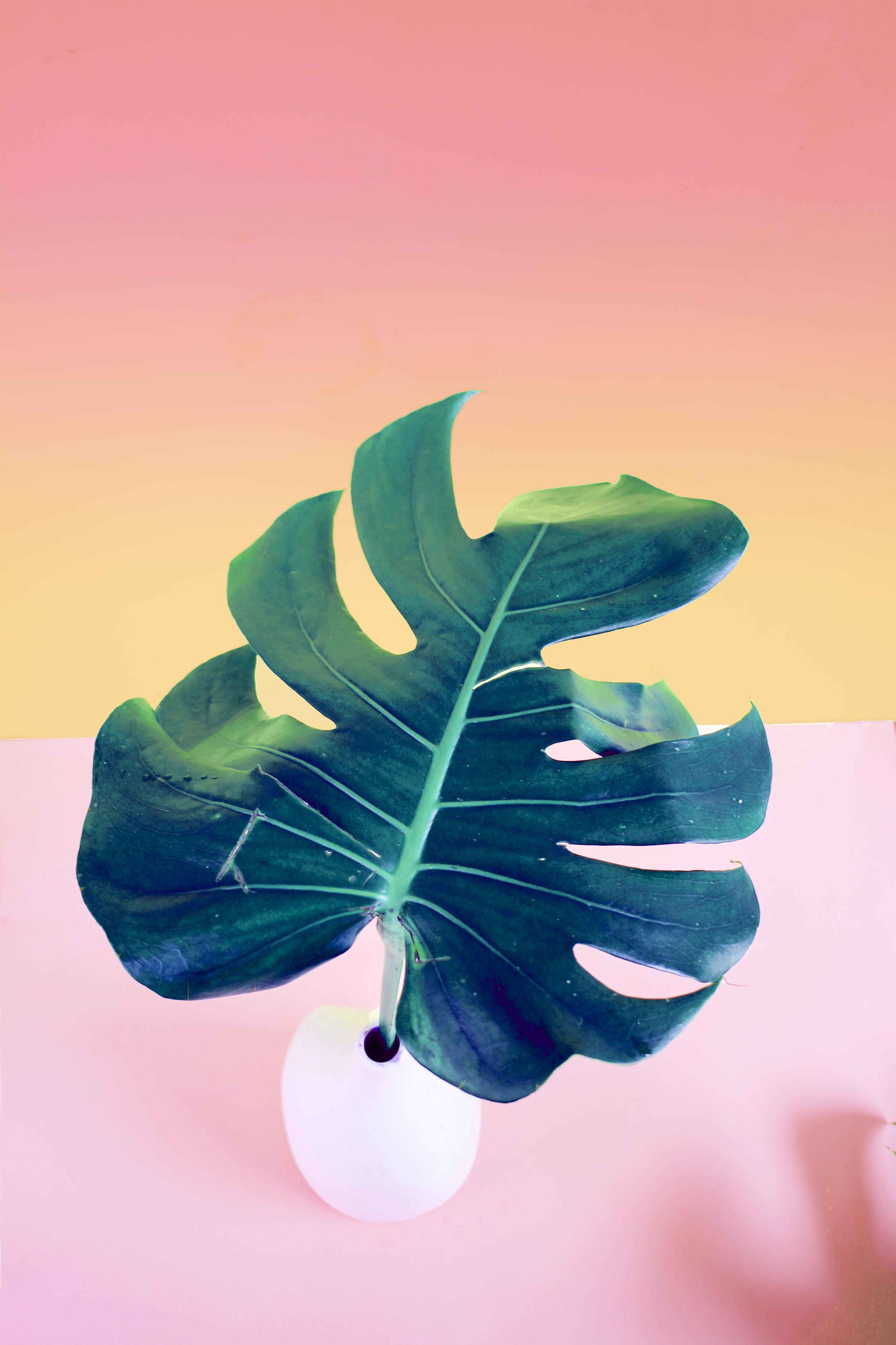 Tropical Leaf Print_01_FINAL.png