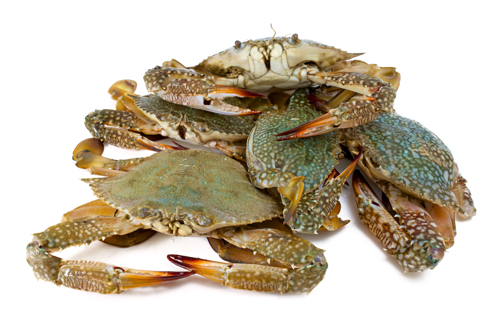 Crabs playing king of the hill?