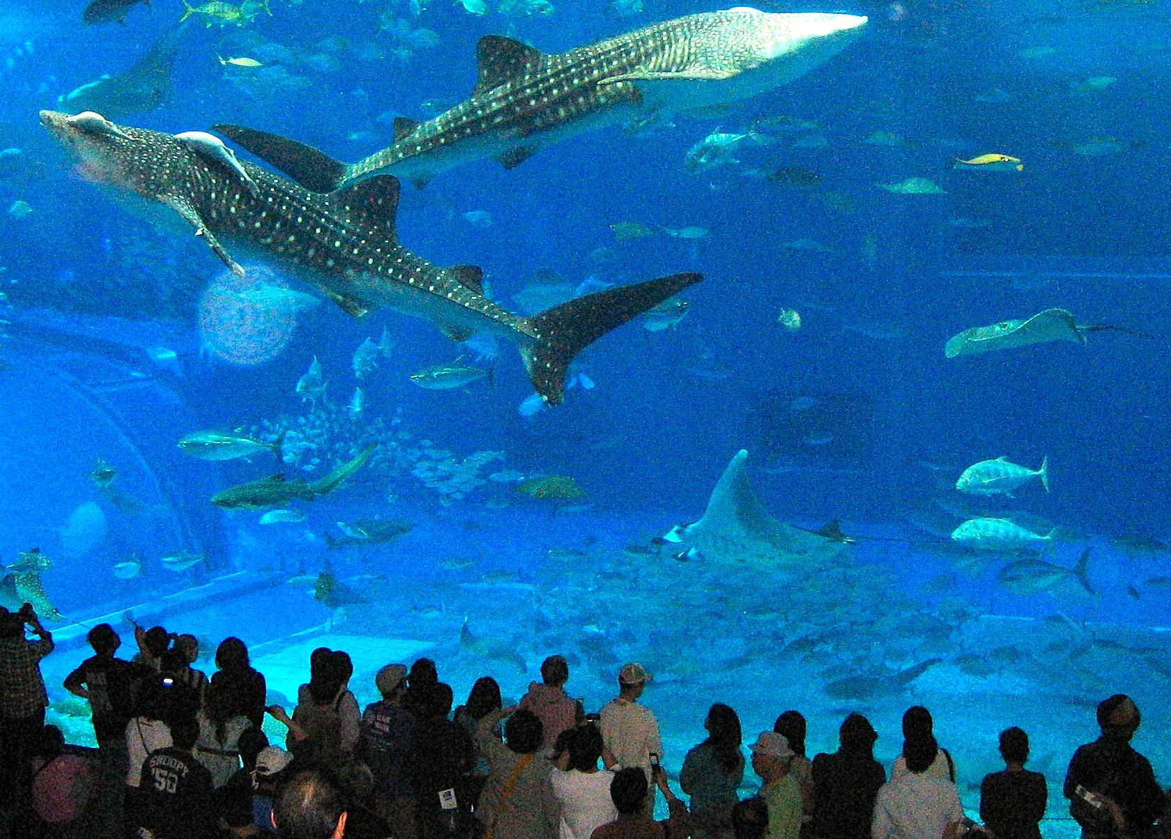 Aquarium in Okinawa, Japan