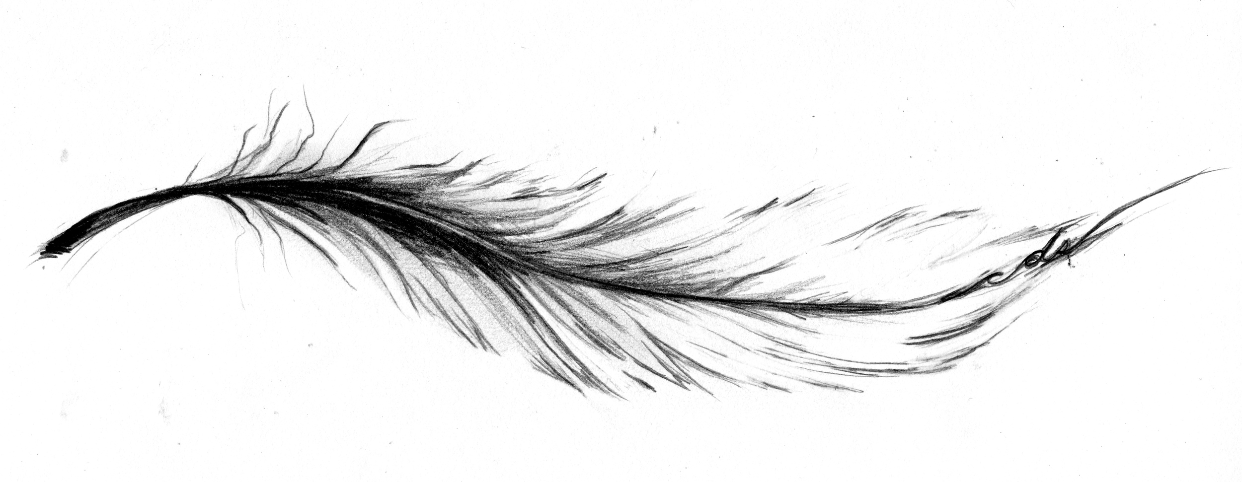 A commissioned sketch of simple Feather with multiple hidden meanings;life is full of ups and downs &darkness and light, a perfect feather doesn't exist and neither does a perfect life, and the initials 'cds' at the end for a significant friend whose life was cut short.
