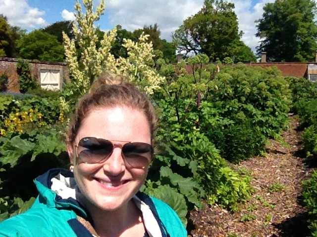 4 foot tall rhubarb plant growing right behind me at Osborne House on the Isle of Wight, England