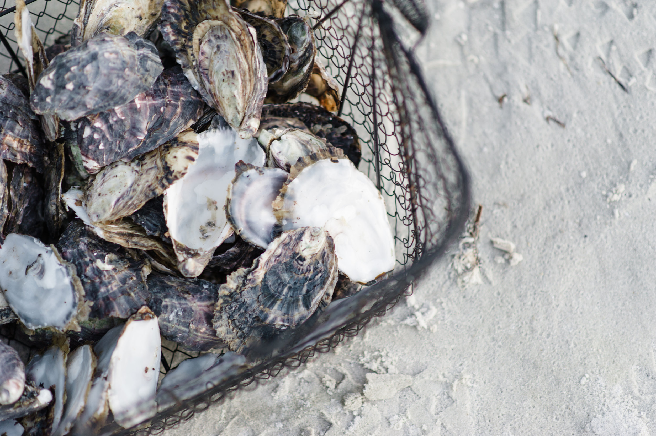 A wire basket of of oyster shells on the beach Photocredit  Samara Clifford Photography